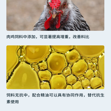 英威腸控寶粉MCT詳情頁切圖6.png